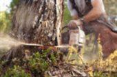 Kaletepe'de ağaç keserken… Hayatını kaybetti!