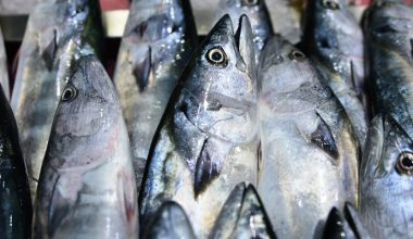 """""""Denizin kırmızı etli balığı"""" palamut 10 liradan tezgahlarda"""