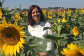 Aksal, Trakya Birlik ayçiçeği alım fiyatlarını açıkladı