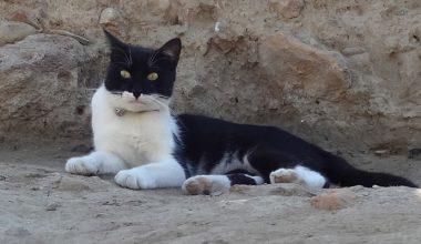 Arkeoloğun hayata döndürdüğü kedi, kazı alanının maskotu