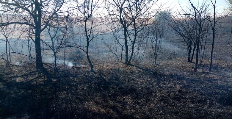 Malkara'da ormanda başlayan yangın, büyümeden söndürüldü