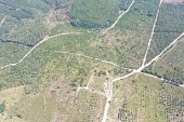 11 yıl önce küle dönen ormanda 128 bin fidan büyüyor