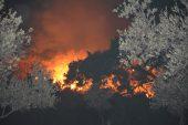 Balıkesir'deki orman yangınına müdahale sürüyor