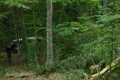 Kaçak ağaç kesen kişi fotokapana yakalandı