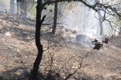 Yangın yüzünden üzüm bağı ve ağaçlar zarar gördü
