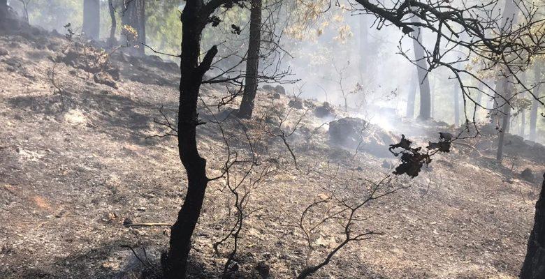 Dursunbey'de çıkan orman yangını kontrol altına alındı