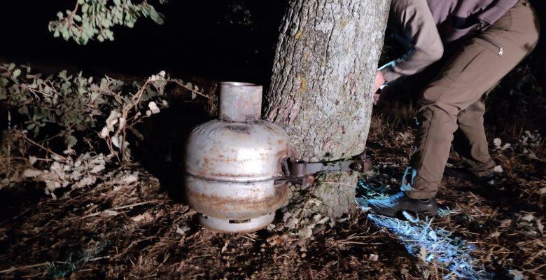 Edirne'de avcıların mutfak tüpüne yerleştirdiği bıldırcın sesi çıkaran düzenek ağaçtan söküldü