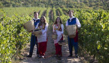 Edirne'de üzüm hasadı başladı