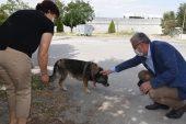 Helvacıoğlu sokak hayvanlarının zehirlenmesini kınadı