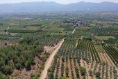 """""""İstanbul ve Ankara'nın vitamin deposu""""nda sofralık üzüm hasadına başlandı"""