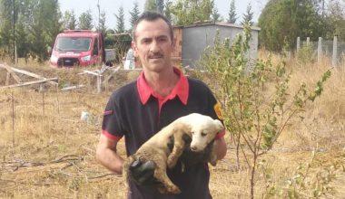 Kırklareli'nde çukura düşen yavru köpeği itfaiye kurtardı