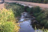 Kırklareli'nde deredeki balık ölümleri araştırılıyor