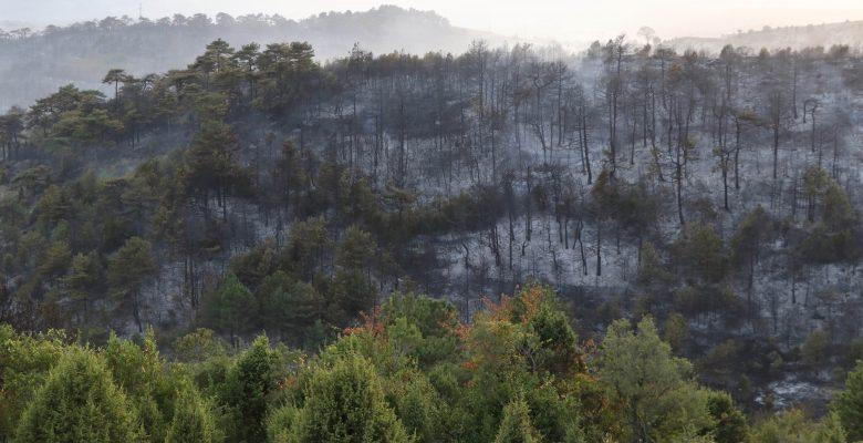 Kocaeli'de çıkan orman yangını söndürüldü