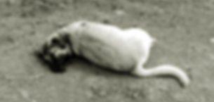 Köpeği telef ettiği öne sürülen muhtara Valilikten soruşturma!