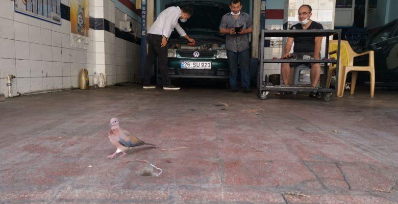 Kuşlar için iş yerinin camını kıran esnaf hayvan sevgisiyle takdir topluyor