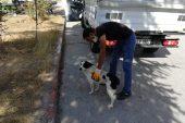Sokak hayvanları için 112 acil müdahale ekipleri oluşturuldu