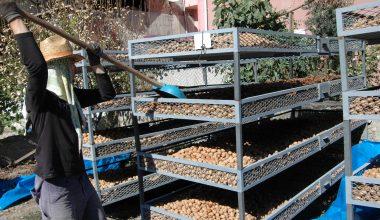 """Astsubay emeklisi evinin bahçesini """"ceviz işleme atölyesi""""ne dönüştürdü"""