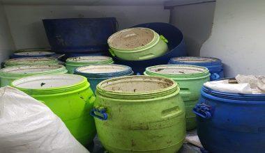 Balıkesir'de 300 kilogram deniz patlıcanına el konuldu