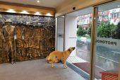 Sağanak nedeniyle kapılarını sokak hayvanlarına açtı