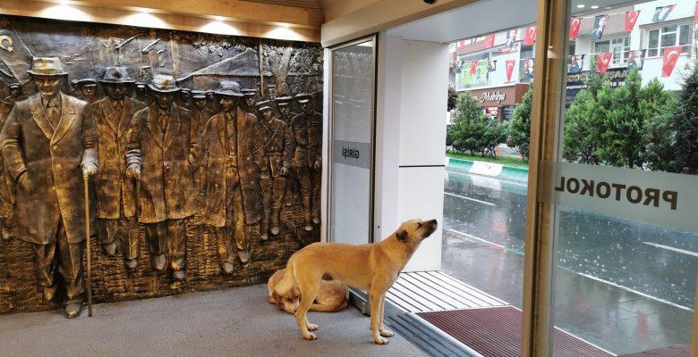 Kırklareli Belediyesi sağanak nedeniyle kapılarını sokak hayvanlarına açtı