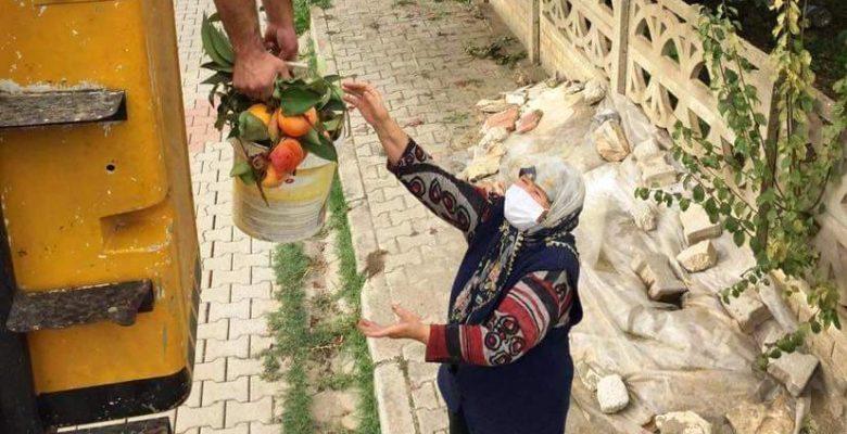 Meyvelerini toplayamayan Nazmiye teyzenin yardımına belediye ekipleri koştu