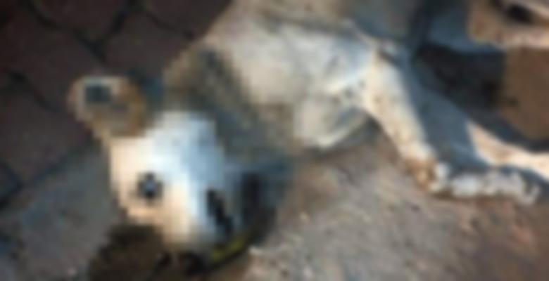 21 sokak köpeğini zehirleyenler yakalandı!