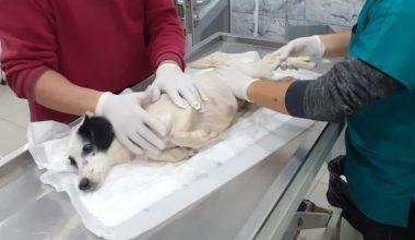 Akaryakıt istasyonunda 2 köpeğin ezilmesiyle ilgili adli işlem başlatıldı