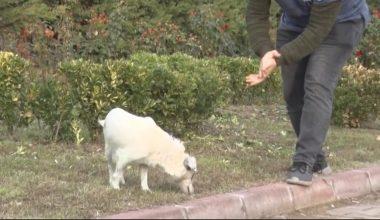 Otomobilin çarparak yaraladığı köpek yeniden koşmaya başladı