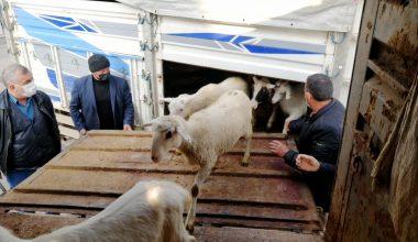 Yangında 70 koyunu telef olan üreticiye destek seferberliği