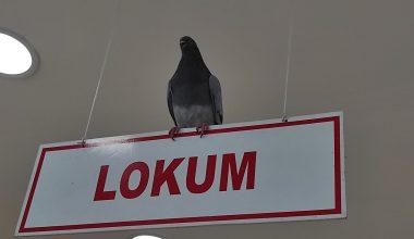 Kuruyemişçiye giren güvercinler çalışanlara zor anlar yaşattı