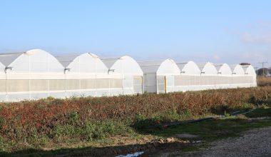 Devlet destekleriyle büyüyen seracılık 113 köye yayıldı