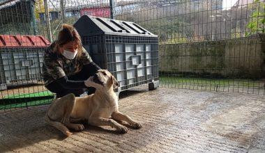 Başkanın fark ettiği hasta köpek, veteriner hekimlerce sağlığına kavuşturuldu