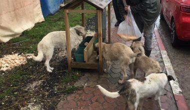 Edirne'de yılbaşında uygulanacak kısıtlamada sokak hayvanları aç kalmayacak