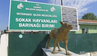 """Edirne Belediyesinden """"yaralı ata müdahale"""" açıklama!"""