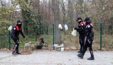 Edirne'de polisler annesiz köpekleri sütle besledi