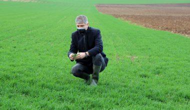 """Edirne'de sağanak, gelişim dönemindeki buğdaya """"bereket"""" oldu"""