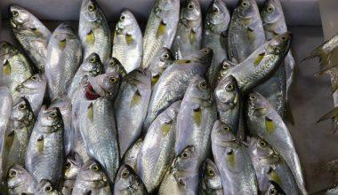 Balıkçı tezgahlarının yeni değerlisi çinekop