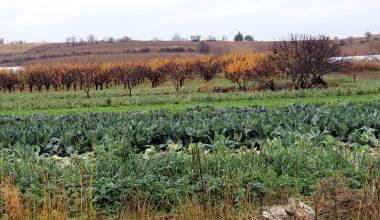 Trakya'da etkili olan yağış çiftçilerin yüzünü güldürdü