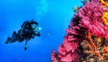 Deniz çayırlarının korunması için BM destekli proje başlatıldı