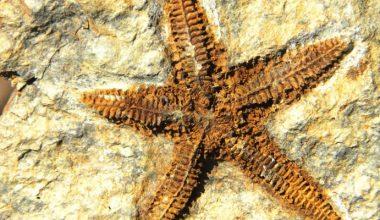 2 milyon yaşında olduğu tahmin ediliyor