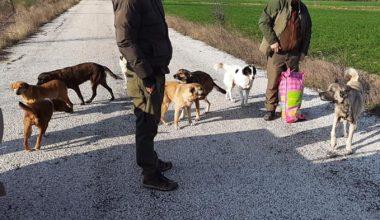 Edirne DKMP ekipleri sokak hayvanlarını besledi