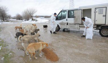 Kar ve soğukta yiyecek bulamayan sokak hayvanlarına mama