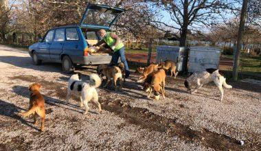 Sokak hayvanları kısıtlama günlerinde düzenli olarak besleniyor