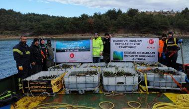 BOTAŞ, FSRU projesinde Saros'daki deniz çayırlarını taşıyor