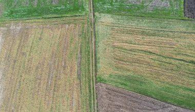 Zirai don erken ekim yapılan buğday ve arpada zarara neden oldu