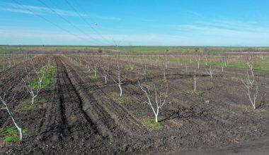 Edirne'de üretime açılan hazine arazileri çiftçiye ek gelir oldu