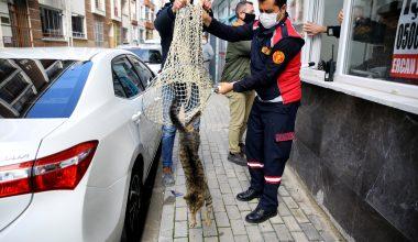 """Mahsur kalan kedi """"HAYDİ"""" çağrısıyla kurtuldu"""