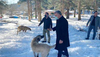 Milletvekili Canbey, yaban hayvanları için yemleme etkinliğine katıldı