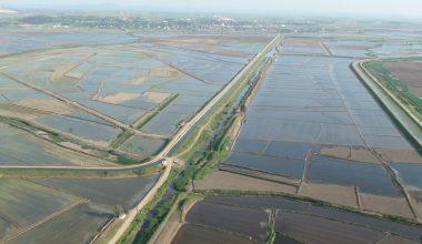 Edirne çiftçisine yıllık 273 milyon liraya yakın ilave gelir…