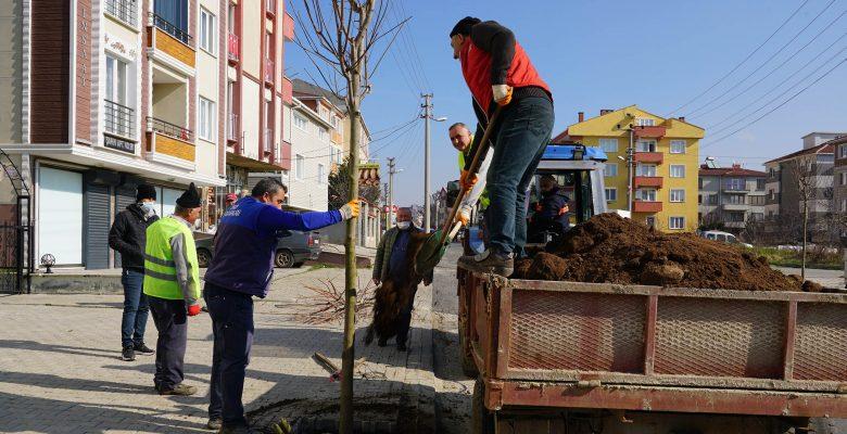 Ağaçlandırma çalışması hızlandı
